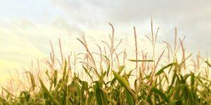 Veranstaltung: Bodenfruchtbarkeit optimieren